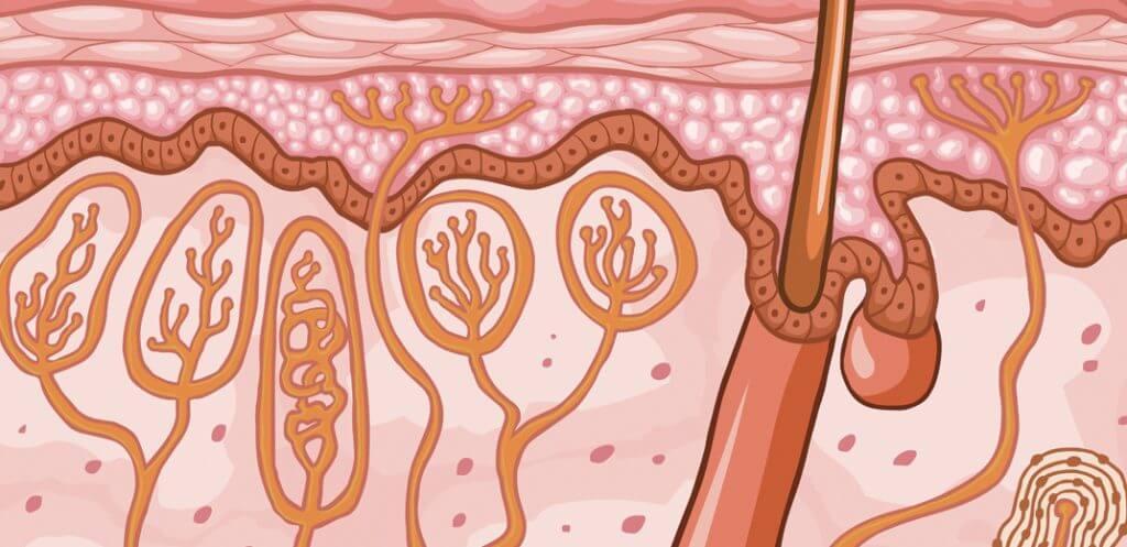 dermatiti