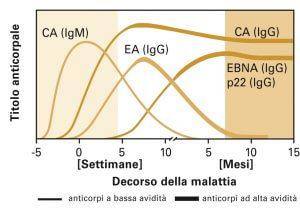 EBV schema