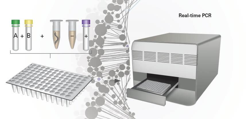 Tecniche-PCR